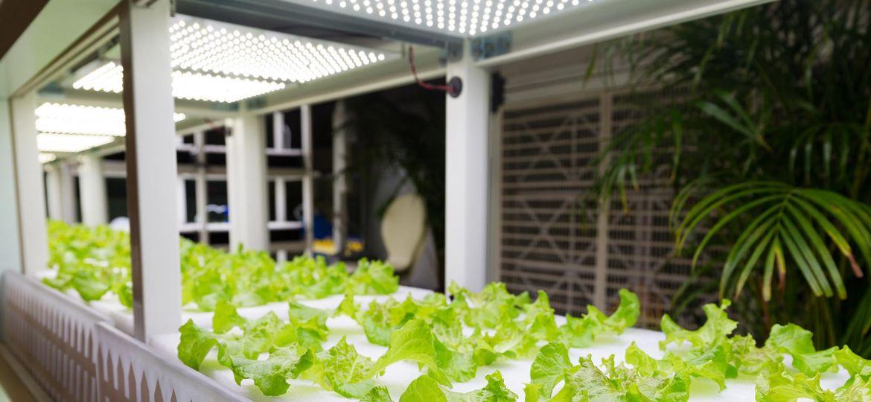 Grow Light Controller - DayBreak LED Grow LuxX Controller